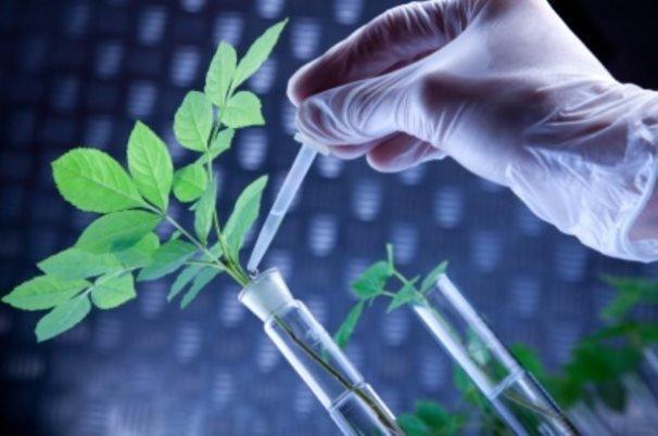 کارگاه زیست فناوری و آنالیز مخاطرات زیست محیطی برگزار گردید