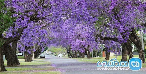 درباره بهشت روی زمین، کشور آفریقای جنوبی، بیشتر بدانیم