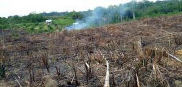 گرم تر شدن اندونزی به دلیل افزایش فراوری روغن پالم
