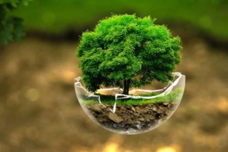 ژانر مفصلی به نام محیط زیست، اما دست نخورده