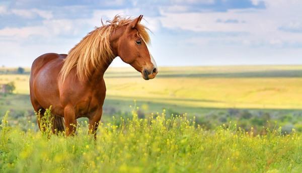 شعر در خصوص اسب ؛ اشعار، جملات و متن های زیبا درباره اسب
